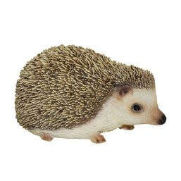 See more information about the Pet Pals Pygmy Hedgehog F