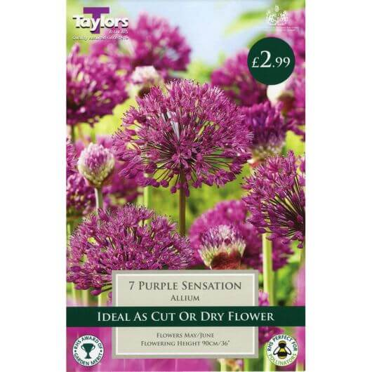 Taylors Allium Purple Sensation