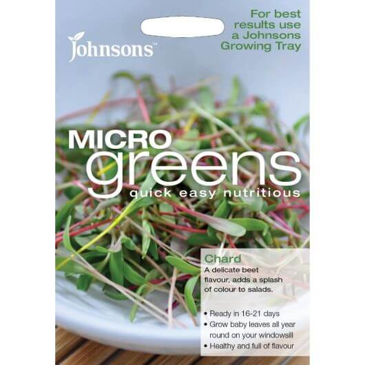Chard Bright Lights Micro Greens