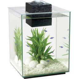 See more information about the Fluval Chi 2 19L Aquarium Set