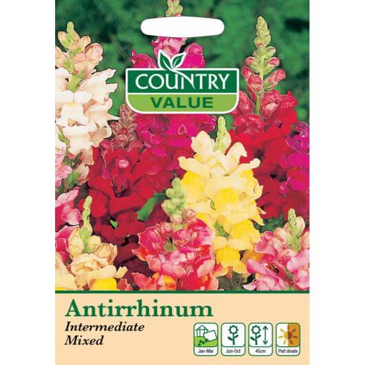 Antirrinum Intermediate Mixed CV MF Seeds