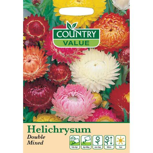 Helichrysum Double Mixed CV MF Seeds
