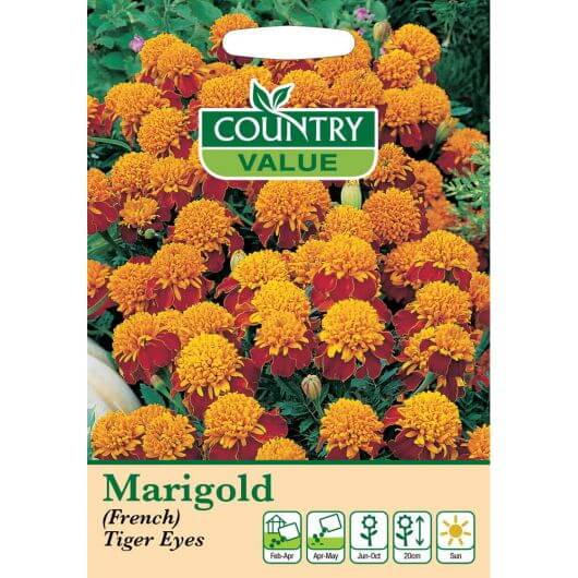 Marigold (French) Tiger Eyes CV MF Seeds
