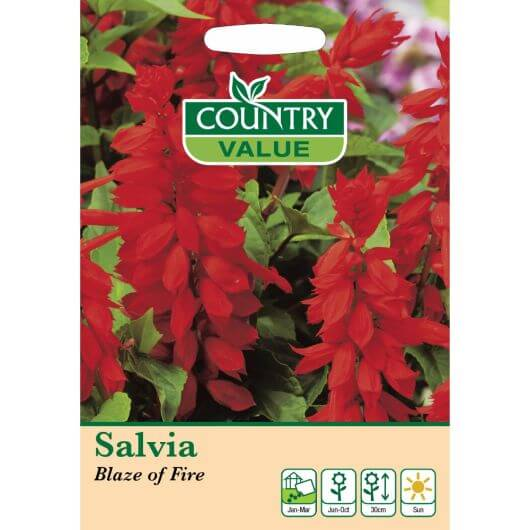 CV Salvia Blaze of Fire MF Seeds