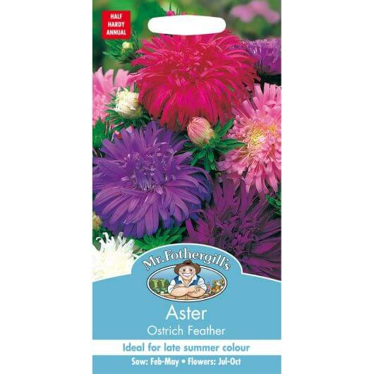 Aster Ostrich Feather MF Seeds