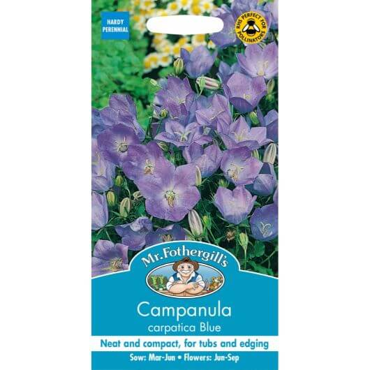 Campanula Carpatica Blue MF Seeds