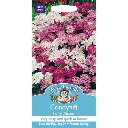 Candytuft Fairy Mixed MF Seeds