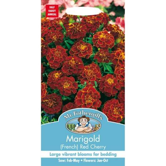 Marigold (French) Red Cherry MF Seeds