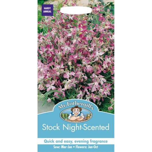 Stock - Night Scented Stock MF Seeds
