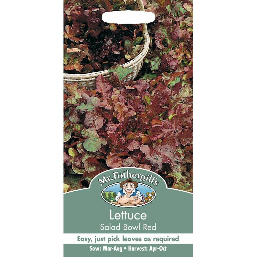 Lettuce Salad Bowl Red MF Veg Seeds