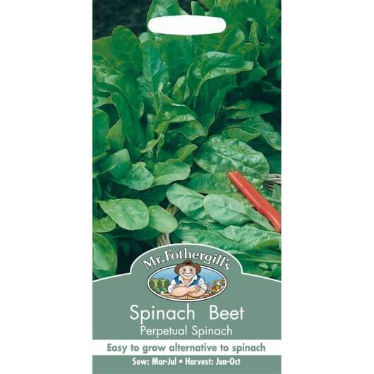 Spinach Beet - Perpetual Spinach MF Veg Seeds