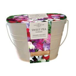 See more information about the Taylors Bulbs - Sweet Pea Oval Enamel Pail Set
