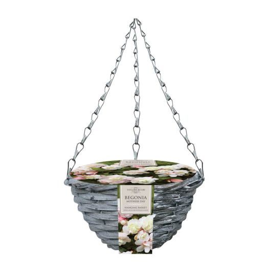 Taylor's Bulbs Begonia Hanging Basket - Mother's Day
