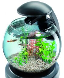 See more information about the Tetra Cascade Globe 6.8L