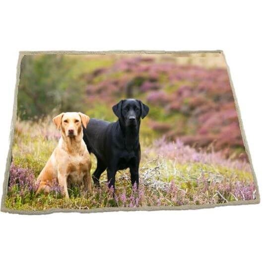 Country Matters Soft touch Throw -  Labs on Moor