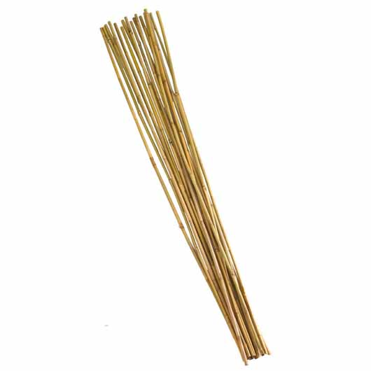 Bamboo Canes - Extra Thick 240 cm bundle of 10